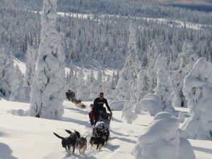 dog sledding through the wilderness