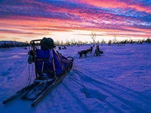 Learn more about our sleddog tours on the new Petter Karlsson website